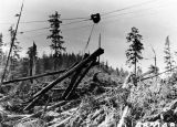 Skyline logging by Ketchikan Pulp Co. in Neets Bay, August 8, 1957.