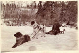 Two dogs pull man on sled, ca. 1897.
