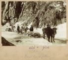 Hauling over the White Pass, April 2, 1899.