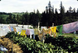 Kulagin's wash drying in the sun.