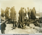 Eskimos dividing up walrus after a hunt, Nome, Alaska.
