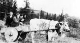 [Homer, Alaska, 1943.  Two Seldovia school teachers and a man in a cart being pulled by a cow.]