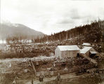 Milk ranch back of Juneau, Alaska, 1899 (Calhoun's Dairy Farm).