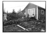 Yakutat, Alaska.  [A garden in Yakutat, with two standing in front of the house.]