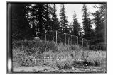 Fox pen, W.H. Dugdell's blue fox farm [on] Knight Island, [near] Yakutat.
