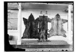 [Skins of four] Mt. St. Elias blue bears [on the front of the Mission House.]