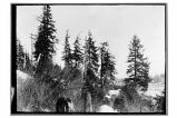 [Winter scene near Yakutat.]