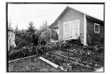 Yakutat, Alaska.  [Two men standing in garden in front of a house.]