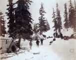 Rainy Hollow, last timber near summit.