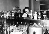 Dr. Harold Furnelle in laboratory at Arctic Research Center in Anchorage.