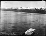 NETS SET FOR FISHING, CHIGNIK, 1939.