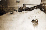 [Husky and snow in Skagway street.]