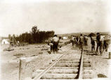 Laying track at Matanuska, 1916.