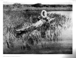 Man paddling kyak [kayak] in weeds along shore.