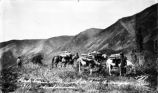 Pack train [with?] [around?] for [Bo Bo?] [Passage?] 1914 Shushanna