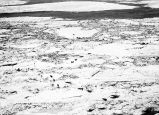 [Bird's eye view of dog sleds carrying supplies over ice floes.]