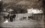 Pullen House Ranch, Skagway, Alaska [Postcard]