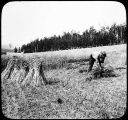 A Harvest Scene in the Tanana Valley.