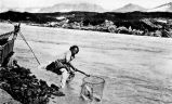 [Dipnetting on the Copper River. A man with a large net catching fish, no date.]