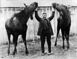 [Jack Carr between two moose, no date.]