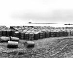 [Attu, Aleutian Islands: salvaged drums of diesel oil piled along beach, May 1943.]