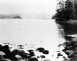 [Tongass from Pine Cove; view of forest in background.]