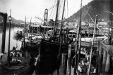 [Halibut schooners, SCANDIA, KING & WINGE and other fishing boats at the old Juneau Cold...