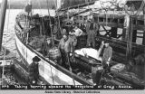 "Taking herring aboard the ""Hedgeland"" at Craig, Alaska."