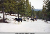 Dog mushing. Dog team pulls sled up snowy hill. A racer runs behind.
