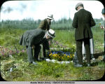 Joe Chapple at Montana picking pansies for Mrs. Sawyer.