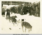 Dog race, Fairbanks.