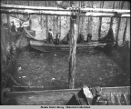 Thlinket Packing Co. Trap No. 6. Aug. 1, 1907. Preparing to lift trap before brailing salmon into...