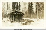 Log cabin in woods; snow covered ground; sled dogs, foreground.