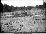 The Great Midden being uncovered by Jack Fields, under Yukon Island, September 27, 1930.