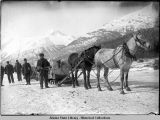 Loaded sleds with men in front, one white and one dark horse, pulling. Snow on ground and...