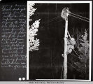 Young brown bear and man on a pole. Incident described at left of picture.  1943-44.