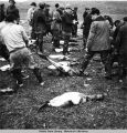 Men skinning seal carcasses.