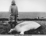Woman in striped parka holding an ulu about to start butchering a bearded seal (ugruk).