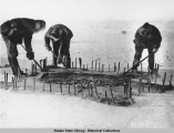 Three men scrape the fat off of a polar bear skin that has been stretched on the snow-covered...