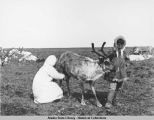 Woman milking a reindeer while a boy holds it by the antlers.