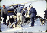 Dogs being lined up for loading into Cessna mail plane.