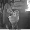 Ole Nicklai's wife Renee does family laundry in big trapping cabin.  Cantwell - Denali trail....