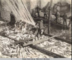 Thlinket Packing Company salmon trap, Funter Bay, ca. 1907.