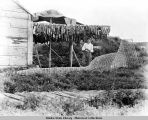 Fish trap and rack of drying salmon, lower Yukon.
