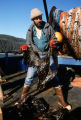 Exxon Valdez oil spill, Alaska Dept. of Fish and Game biologist Larry Aumiller holding a dead...