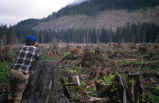 Alaska Department of Fish and Game biologist viewing clearcut logging area, Southeast Alaska, ca....