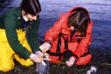 D.E.C. workers collect beach samples.