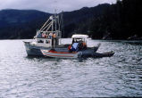 Boat anchored with skiff and workers from the Homer Area Recovery Coalition (HA.R.C.) unloading...