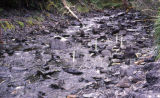 Spawned out salmon stream with survey stakes