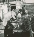 King crab fishermen pulling crab pots near Kodiak, 1959.